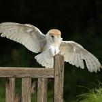 PWP_015__Flight-Cage_