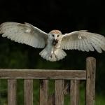 PWP_016__Flight-Cage_