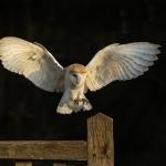 PWP_028__Flight-Cage_