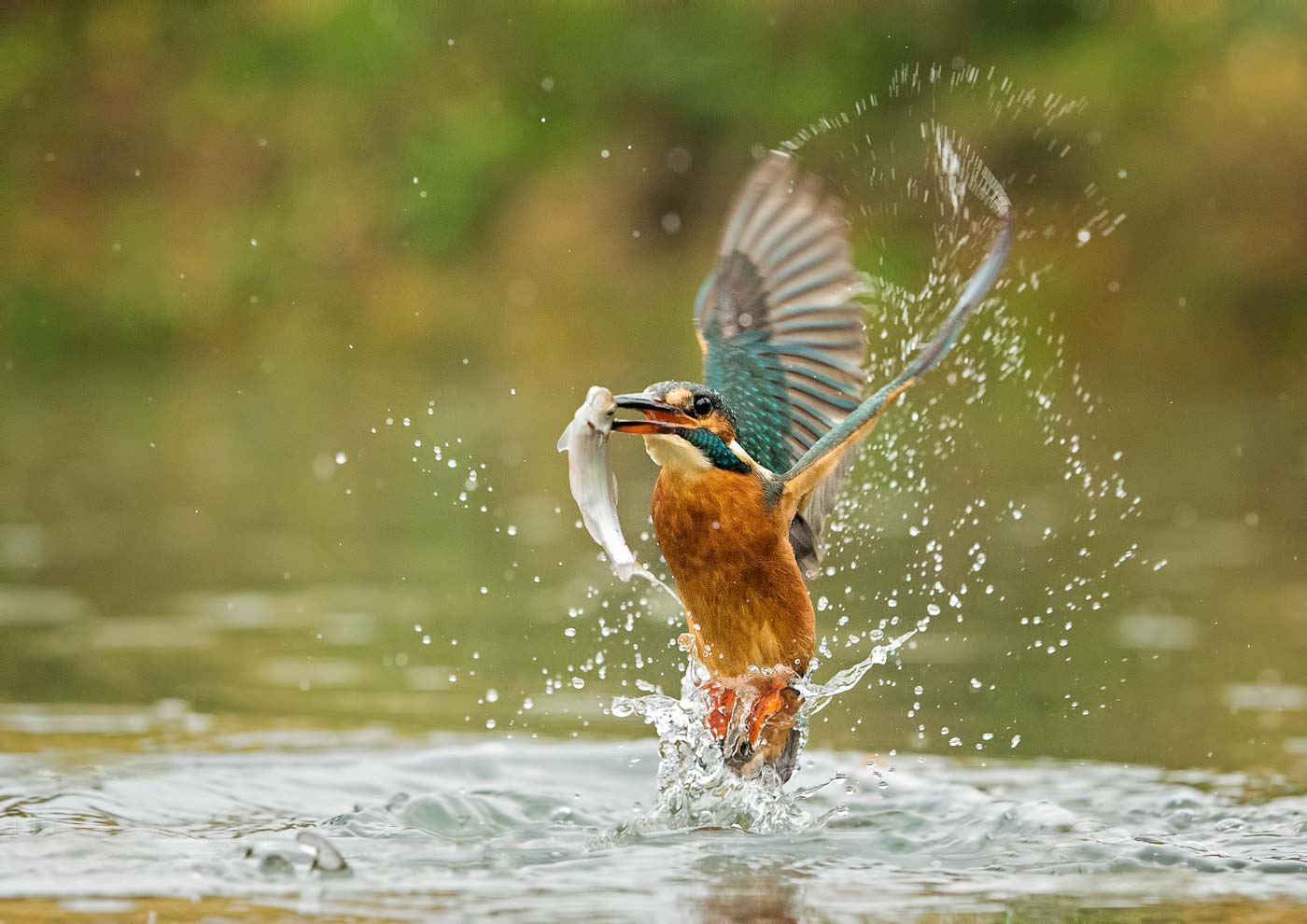 PWP_Kingfisher_005