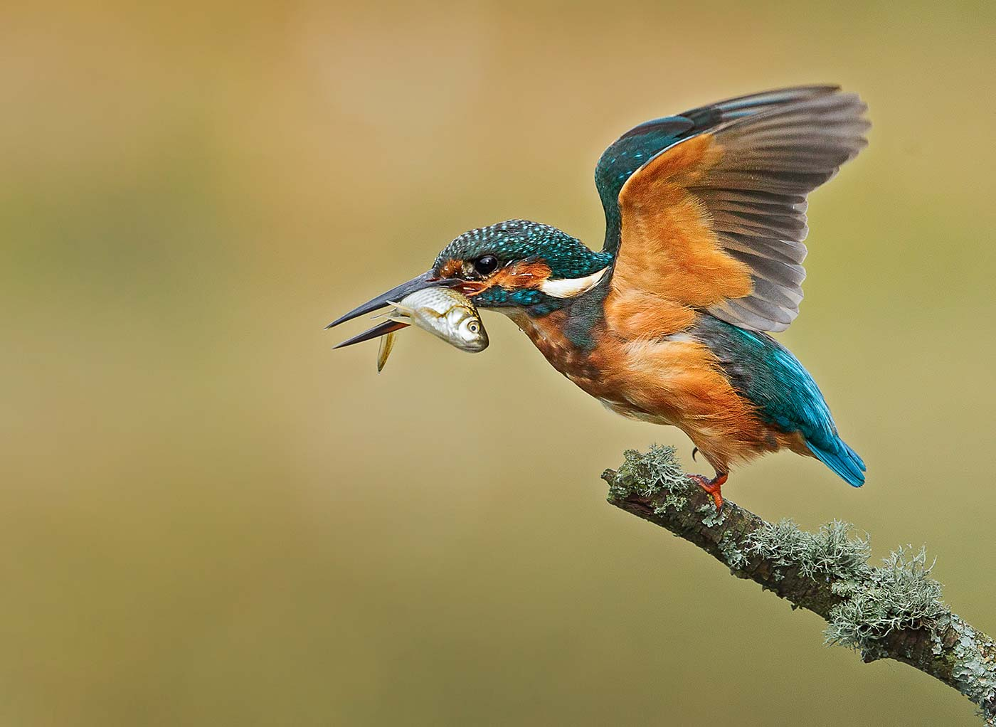PWP_Kingfisher_009