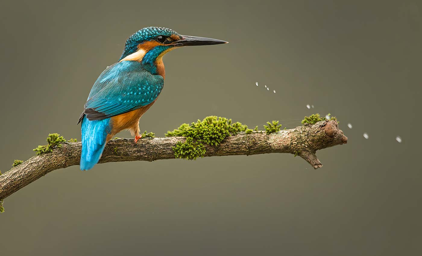 PWP_Kingfisher_020
