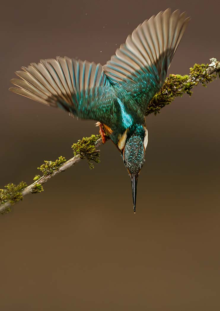 PWP_Kingfisher_023
