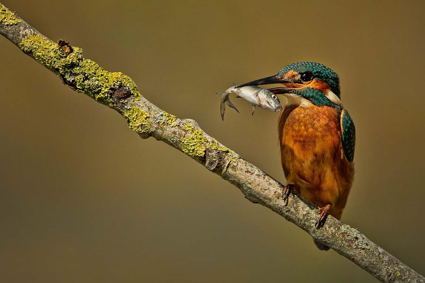 PWP_Kingfisher_025