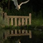 PWP_1400x1050_Barn_Owl_38_039
