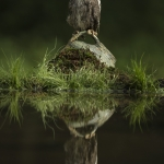 Reflection-Pool-Scotts-Owl