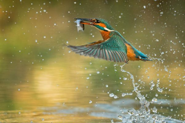 Kingfisher 27 with catch