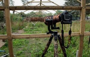 Flight-Photographers-window-with-Barn-Owl